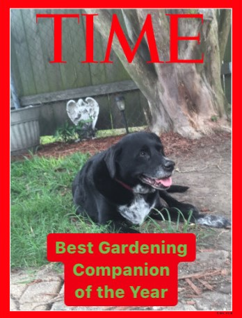 Sadie bear time magazine 6 1 20
