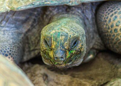 Turtle seychelles
